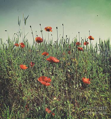 Poppy Field 2 Print by SK Pfphotography