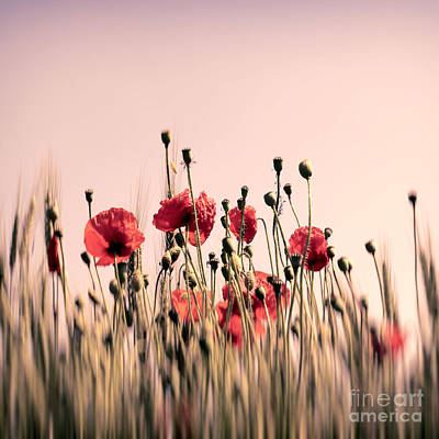 Poppy Field Abstract Print by SK Pfphotography