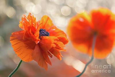 Flower Memorial Photograph - Poppy Flowers 1 by Ernesto Ruiz