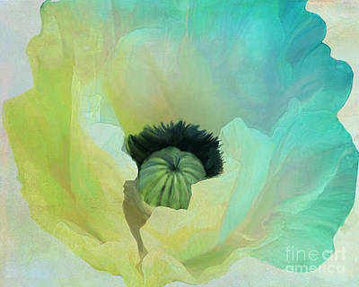 Poppy Gradient Aqua Print by Mindy Sommers