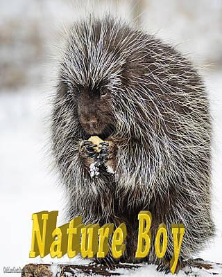 Boy Photograph - Porcupine Nature Boy by LeeAnn McLaneGoetz McLaneGoetzStudioLLCcom