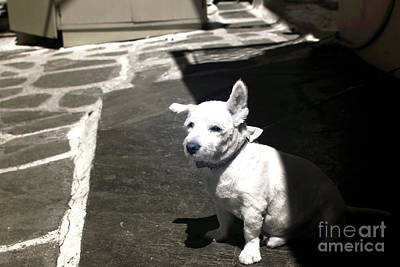 Dog Pics Photograph - Porkchop In The Shadows Infrared by John Rizzuto
