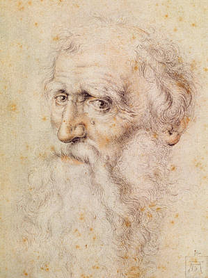 Portrait Of A Bearded Old Man Print by Albrecht Durer or Duerer