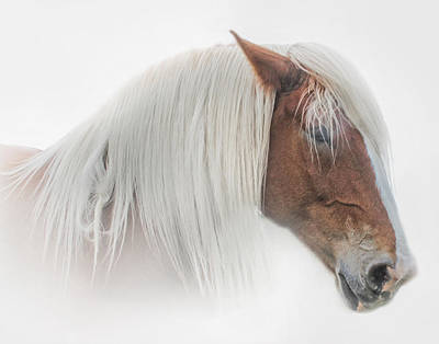 Belgian Draft Horse Photograph - Portrait Of A Belgian Horse by David and Carol Kelly