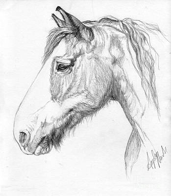 Draft Horses Drawing - Portrait Of A Clydesdale by Angela Marks