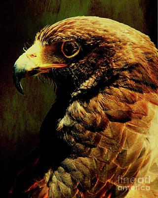 Hawk Digital Art - Portrait Of A Hawk . Texture . 40d7882 by Wingsdomain Art and Photography