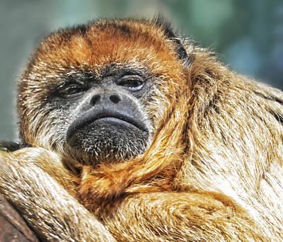 Portrait Of A Howler Monkey Print by Jim Fitzpatrick
