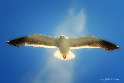 Portrait Of A Seagull Print by John A Rodriguez