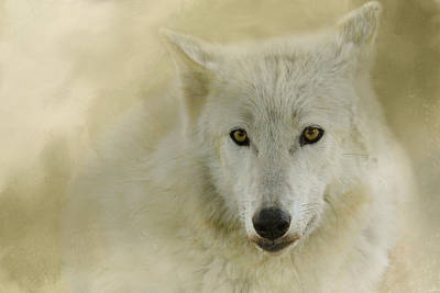 Arctic Wolf Photograph - Portrait Of A Timber Wolf by Jai Johnson