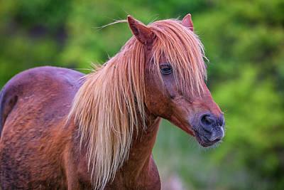 Portrait Of An Assateague Pony Print by Rick Berk