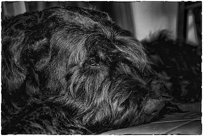 Portrait Of Black Dog Print by Andrei SKY