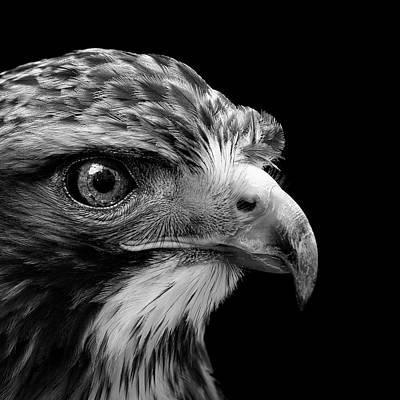 Black And White Bird Photograph - Portrait Of Common Buzzard In Black And White by Lukas Holas