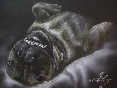 Boxer Dog Art Drawing - Portrait Of Roxi by Jonathan Anderson