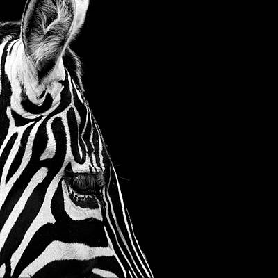 Of Zebras Photograph - Portrait Of Zebra In Black And White Iv by Lukas Holas