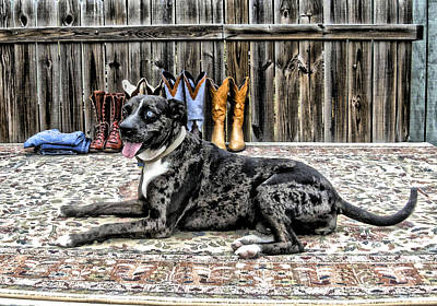 Catahoula Photograph - Posing Pretty by K Marie