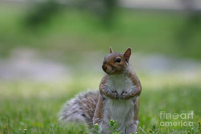 Squirrel Photograph - Posing Squirrel 2 by David Bishop