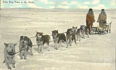 Arctic Dog Painting - Postal Mail Prize Dog Team In The Arctic 1911 by Celestial Images