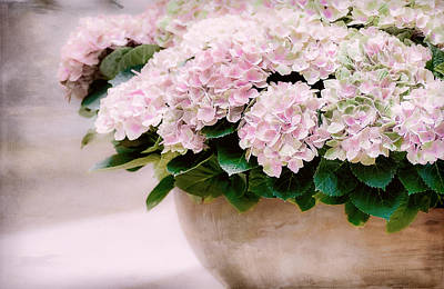 Pot Of Hydrangeas Print by Julie Palencia