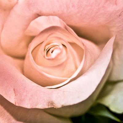 Photograph - Powder Pink by Nora Blansett