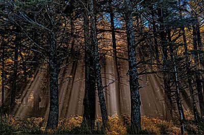 Sun Rays Digital Art - Power In The Woods by Paul W Sharpe Aka Wizard of Wonders