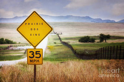 Photograph - Prairie Dog Crossing by Tamyra Ayles