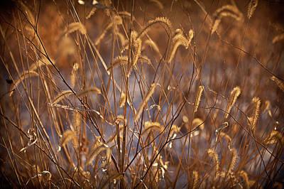 Prairie Grass Blades Original by Steve Gadomski