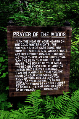 Prayer Of The Woods Print by Michelle Calkins
