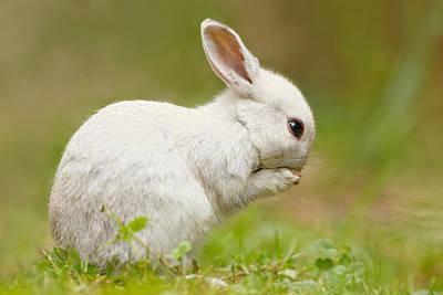 Praying White Rabbit Print by Roeselien Raimond