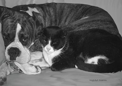 Cats And Dogs Digital Art - Precious Pals by DigiArt Diaries by Vicky B Fuller
