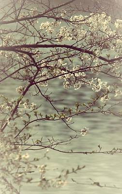 Blossoms Photograph - Precious Spring by  The Art Of Marilyn Ridoutt-Greene