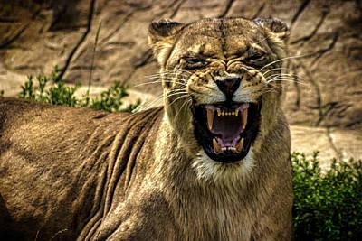 Elegant Cat Photograph - Predator by Martin Newman