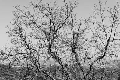 Pretoro - Trees Print by Andrea Mazzocchetti