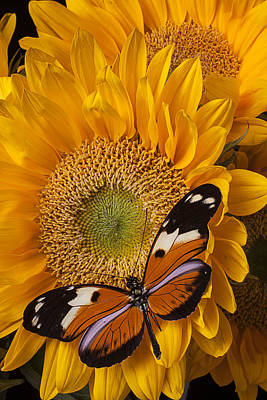 Pretty Butterfly On Sunflowers Print by Garry Gay