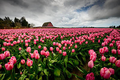 Grey Clouds Photograph - Pretty In Pink by Dan Mihai