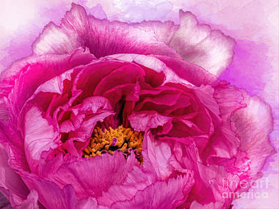 Pretty In Pink Print by Gillian Singleton