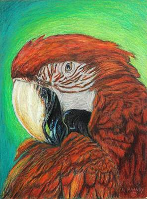 Macaw Drawing - Pretty In Red by Angela Finney