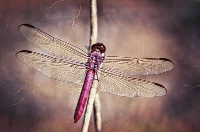 Pretty Pink Dragonfly  Print by Saija  Lehtonen