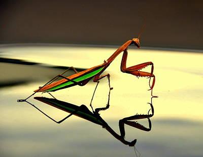 Eagls Digital Art - Preying Mantis by Aron Chervin