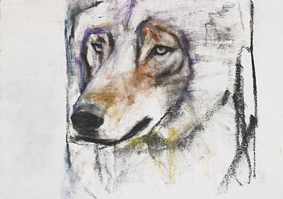 Wolf Drawing - Processo Al Lupo by Mark Adlington