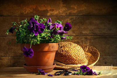 Violet Photograph - Pruning Purple Pansies by Sandra Cunningham
