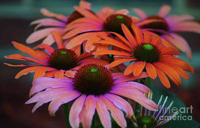 Photograph - Psychedelic Daisies by Patti Whitten