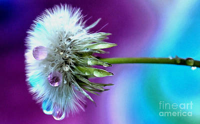 Abstract Flower Photograph - Psychedelic Daydream by Krissy Katsimbras