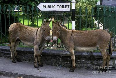 Donkey Photograph - Public Toilet by John Greim