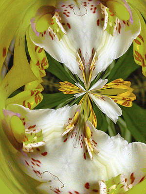 Puckered Orchid By Jean Noren Print by Jean Noren