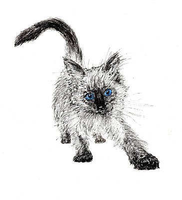 Blue And Grey Drawing - Pudsquiz Belina On The Prowl  by Vincent Alexander Booth