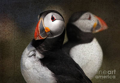 Puffin Digital Art - Puffin Double by Lisa Cockrell