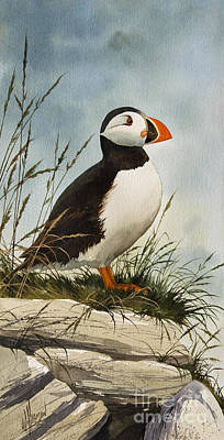 Puffins Painting - Puffin by James Williamson