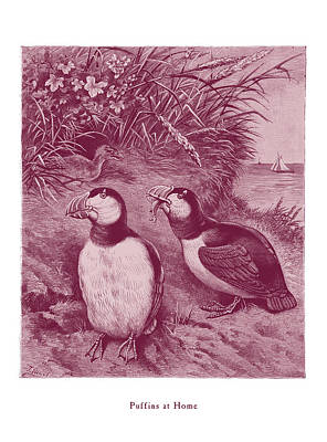 Puffin Drawing - Puffins At Home by David Davies