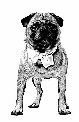 Graphic Drawing - Pug by Edward Fielding