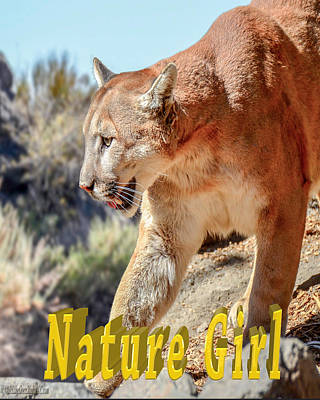 Cougar Photograph - Puma Mountain Lion Nature Girl by LeeAnn McLaneGoetz McLaneGoetzStudioLLCcom